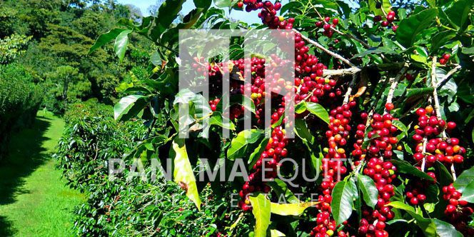 Panama Farmland - A Guide to Agriculture Investment in Panama