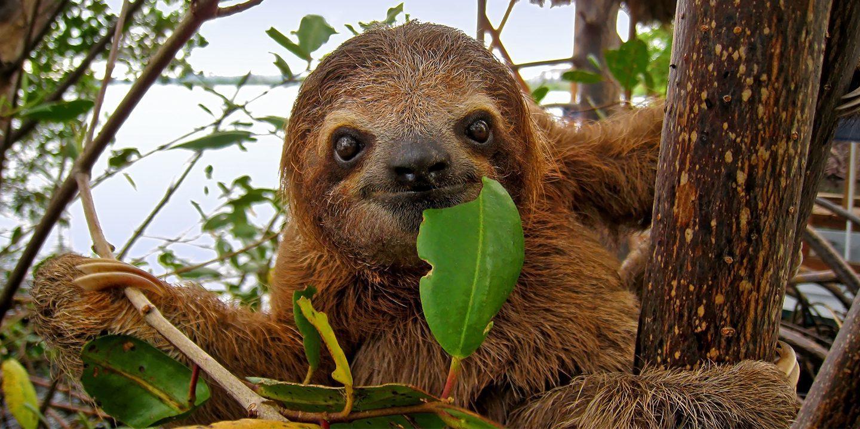 Sloth Metropolitan Park