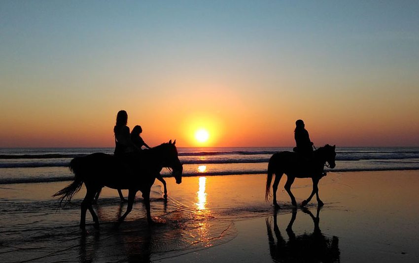 Stables, Horse Communities, and Equestrian Centers in Panama