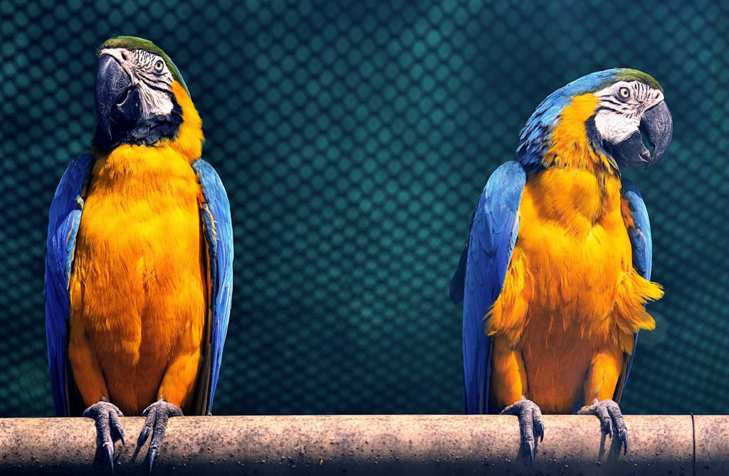 animals-exotic-feathers