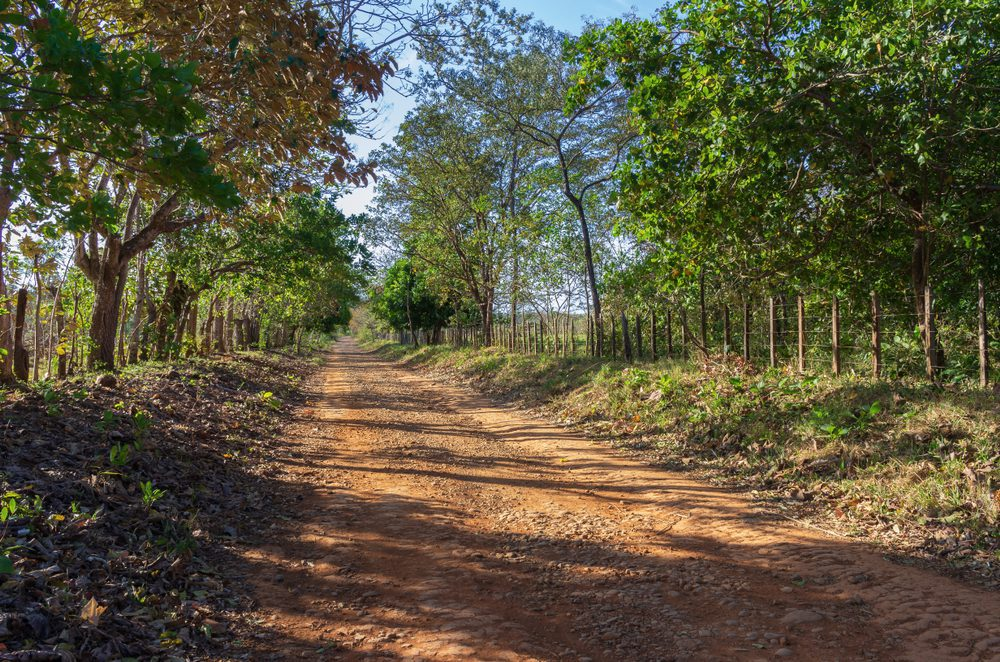 A dirt road leading to a beach along the Pacific coast in western Panama.