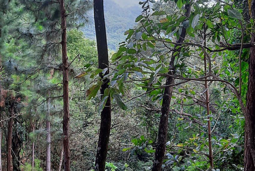 laurel altos del maria panama land for sale (1)