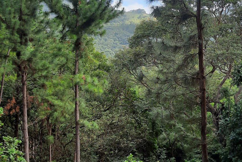 laurel altos del maria panama land for sale (3)
