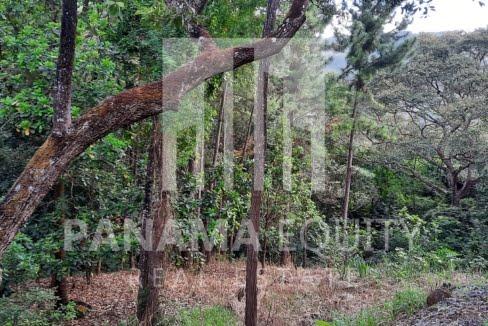 laurel altos del maria panama land for sale