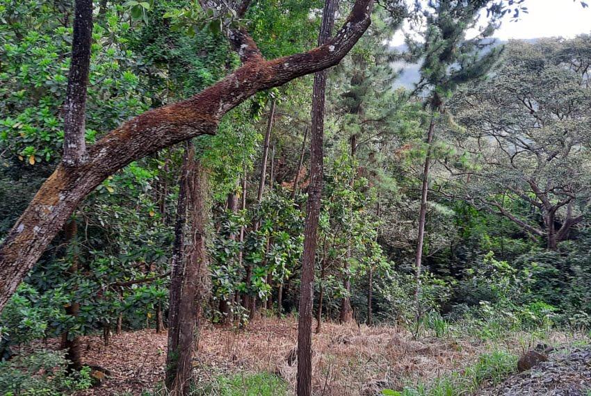 laurel altos del maria panama land for sale (4)