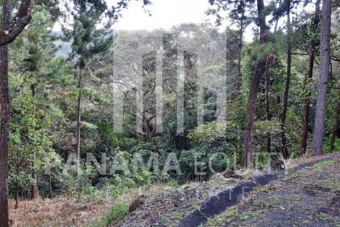laurel altos del maria panama land for sale (5)