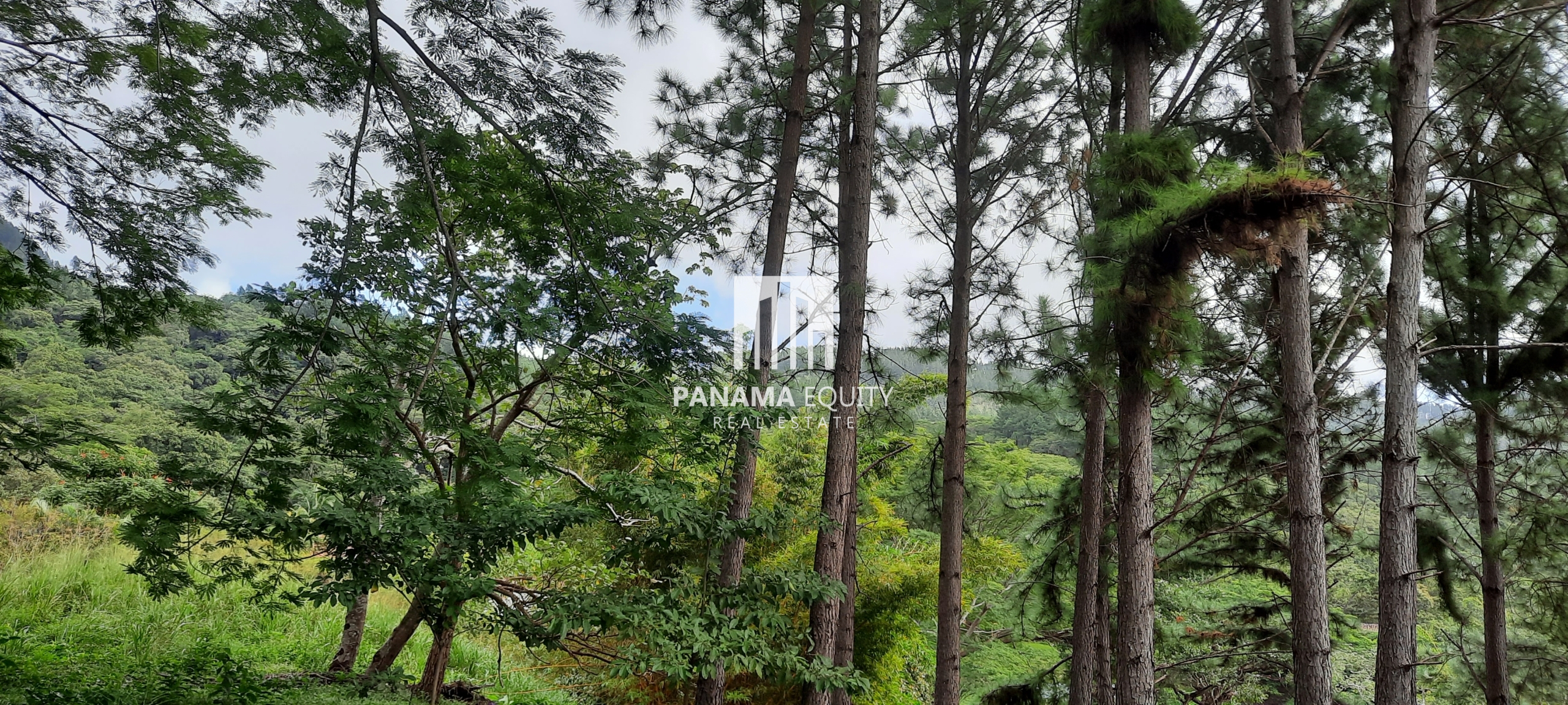 Cool Climate Year Round High In the Panamanian Mountains